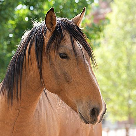 Adoptable Male Quarterhorse / Mustang / Mixed