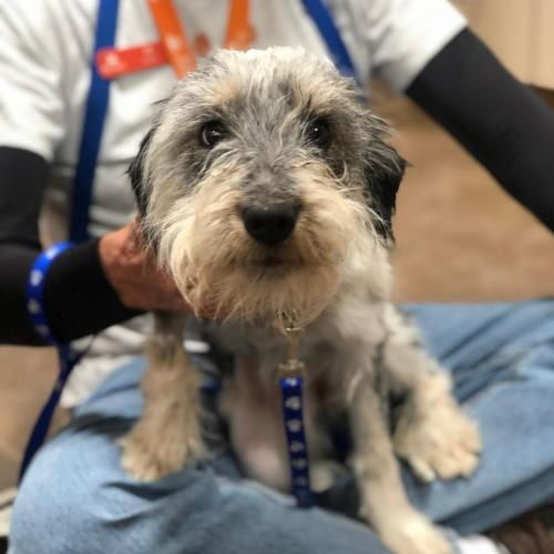 Adoptable Female Terrier / Mixed