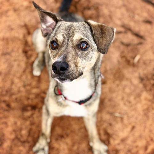 Adoptable Male Terrier / Mixed