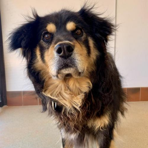 Adoptable Male Border Collie / Mixed