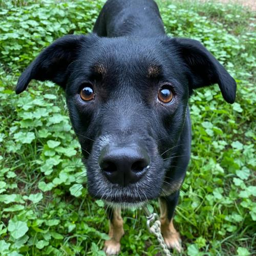 Adoptable Male Terrier