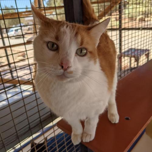 Adoptable Male Male