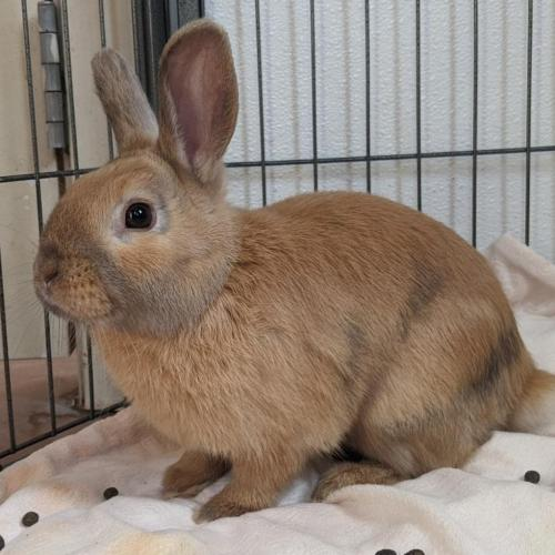 Adoptable Male Harlequin / Mixed