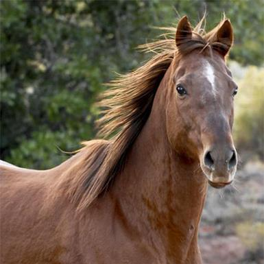 Adoptable Male Thoroughbred / Quarterhorse / Mixed