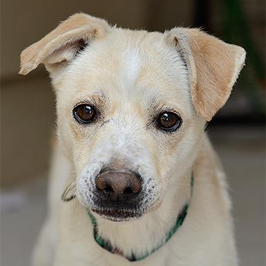 Adoptable Male Terrier (medium coat)