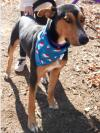 adoptable Dog in , OR named Spruce JuM