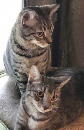 Photo of Thor And Yoda - Bonded Pair