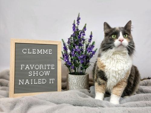 Photo of Clemme