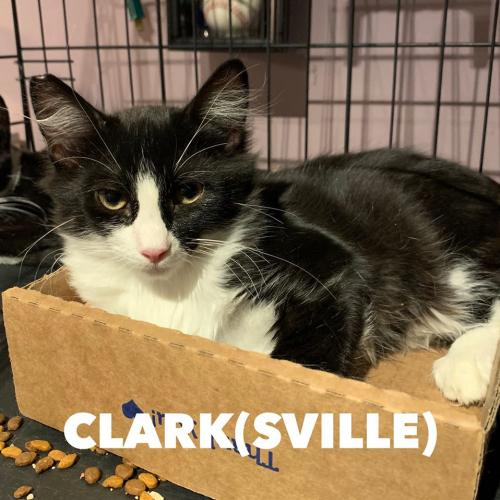 Photo of Clark(sville) And Tennessee