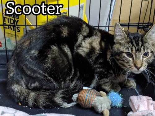 Photo of Scooter