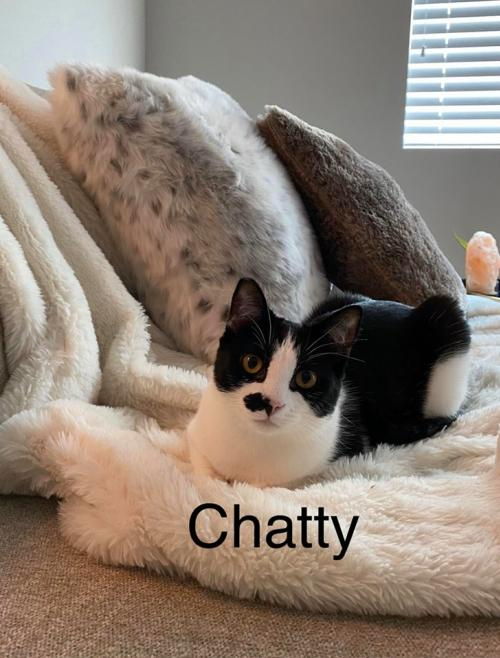 Photo of Chatty & Nash (bonded Pair)