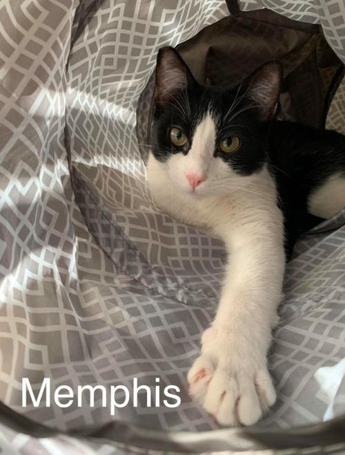 Photo of Memphis