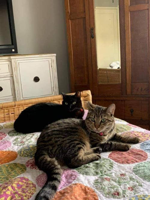 Photo of Lucille & Barrie (ca) - Bonded Pair