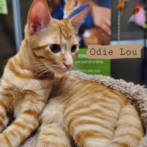 Photo of Odie Lou