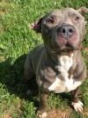 adoptable Dog in , VT named Parrot