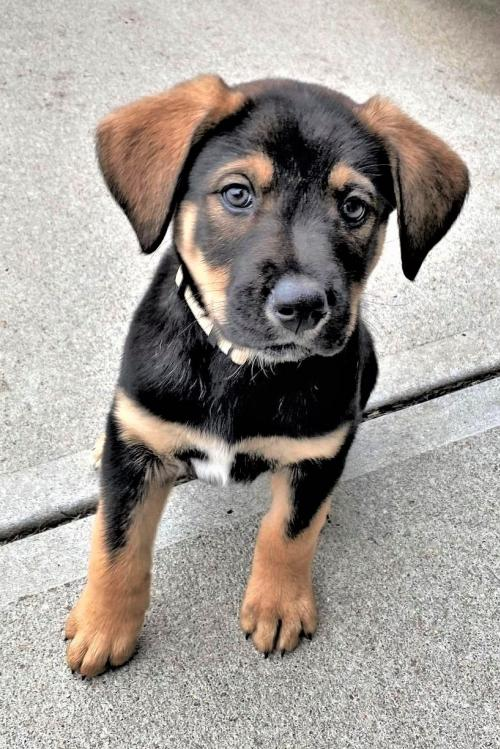 Hickory (Hope's Puppy)