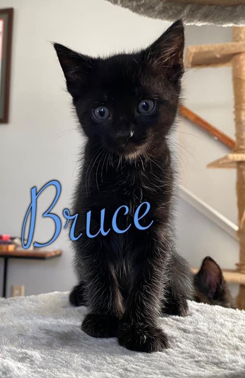 Bruce (Available August 21st)
