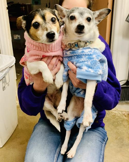Peanut and Greta (bonded sisters-in foster)