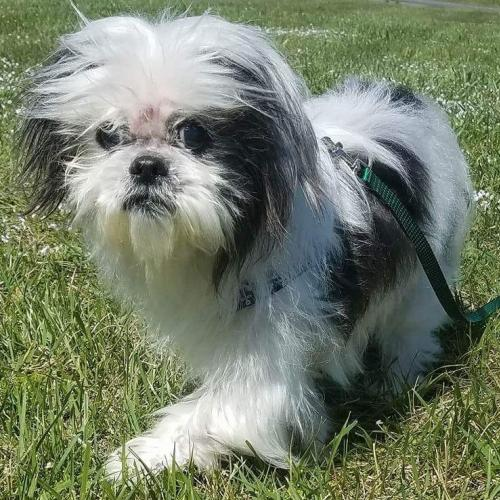 Harry-Fostered