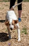 Buster -  Not at the Shelter