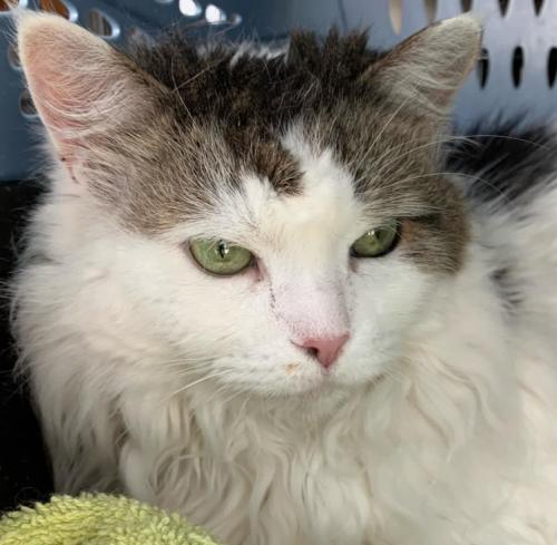 Patches - Not at the Shelter