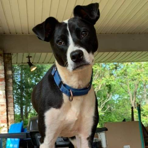 ROSCOE: Not at the shelter