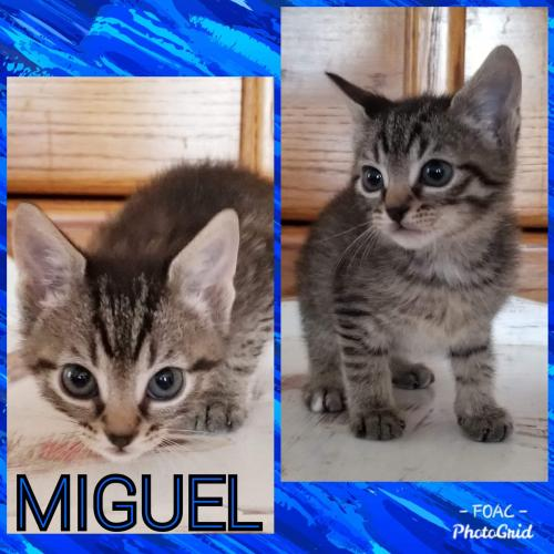 Miguel (Christa's baby): not at the shelter