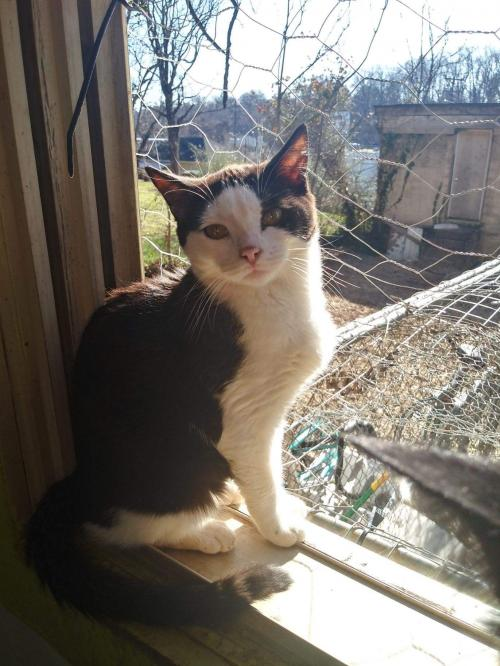 Magpie: Not at the Shelter