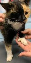 Tortellini: Not At the Shelter