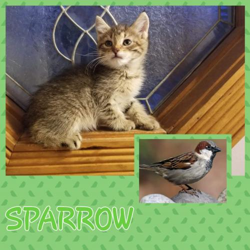 Sparrow - Not at the shelter