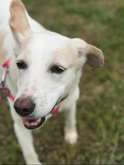 Sweetie Pie - Not at the Shelter