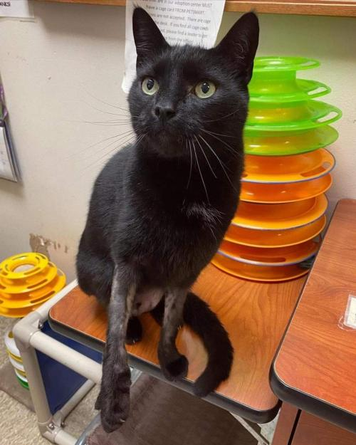 "Rascal ""Long Legs:"" Visit at Petsmart"