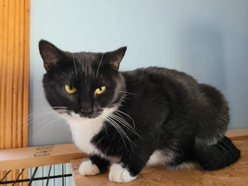 Catra - Not at the Shelter