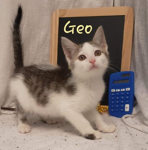 Geo: Not At the Shelter