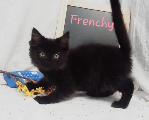 Frenchy - At the Shelter