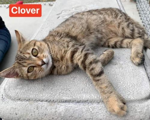 Clover - At the Shelter