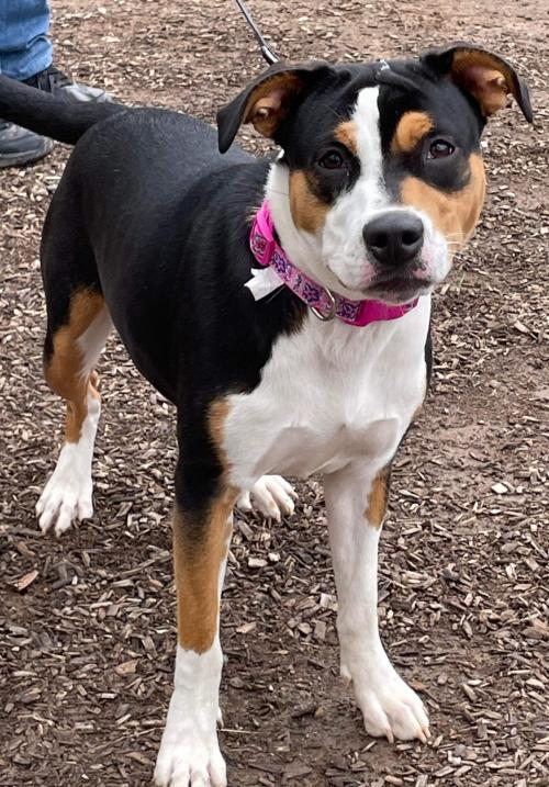 Layla - At the Shelter