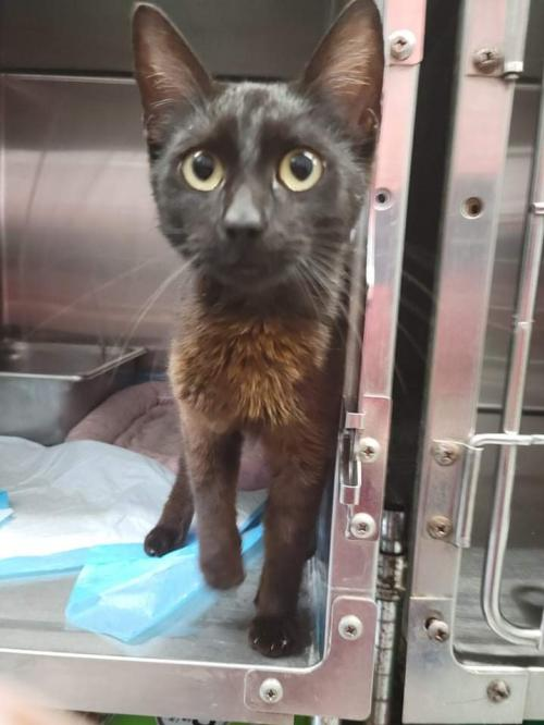 Binx -Not At the Shelter