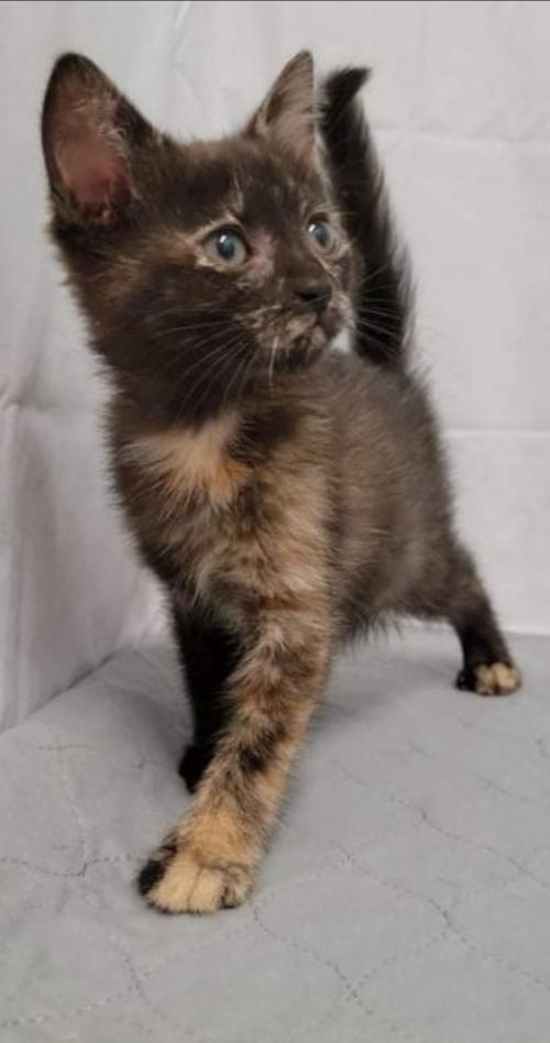 Desi - Not at the Shelter