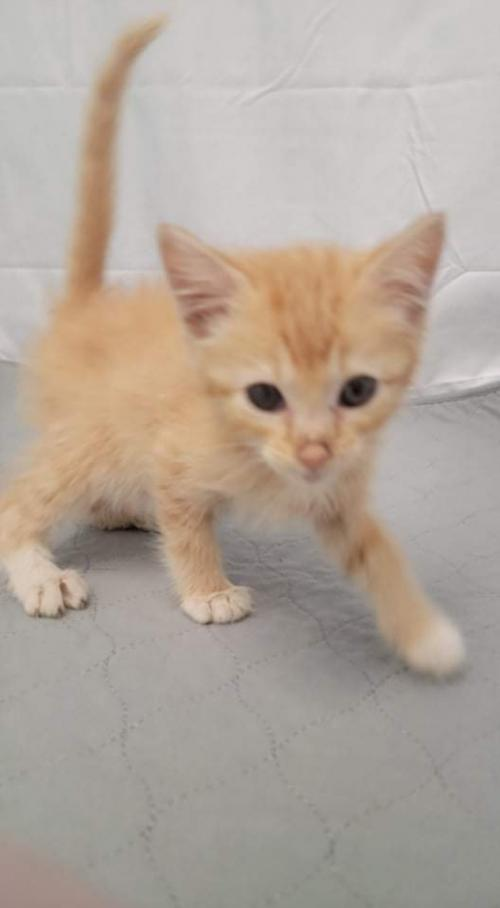 Peanut Butter - At the Shelter