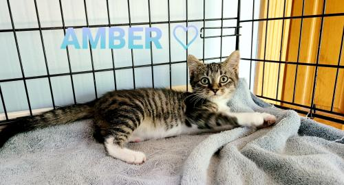 Amber - Not At the Shelter