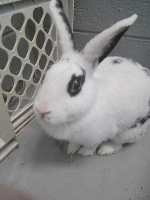 Wafer Bunny - Not at the Shelter