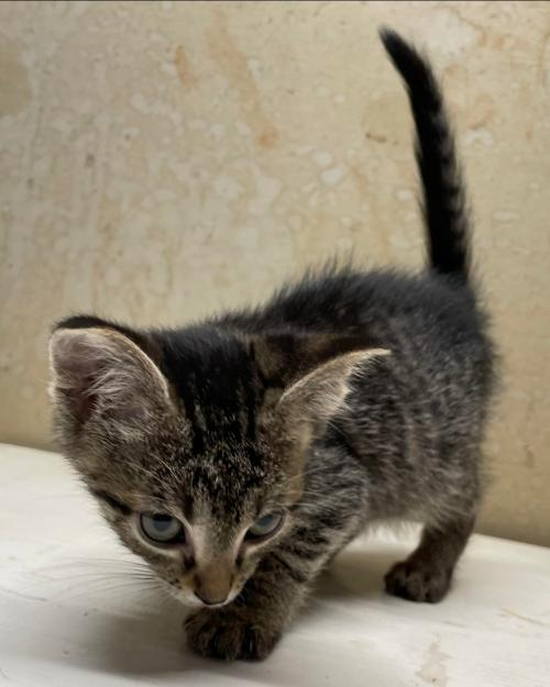Blueberry Buckle: Not at the Shelter