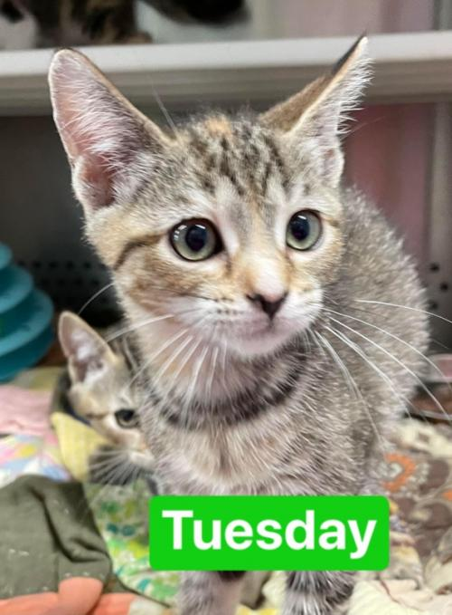 Sunday's Tuesday: Not at the shelter