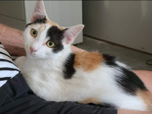 Kimmy - Not at the Shelter