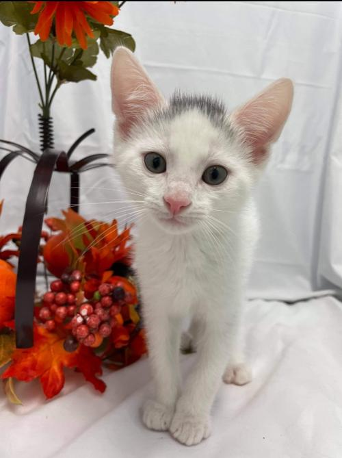 Glinda the Good Witch - At the Shelter