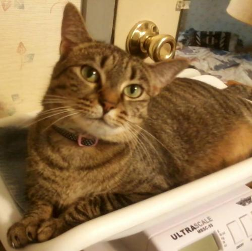 Tabitha: Not at the Shelter