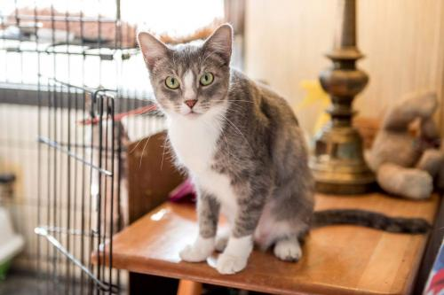 Gracie: Not at the Shelter