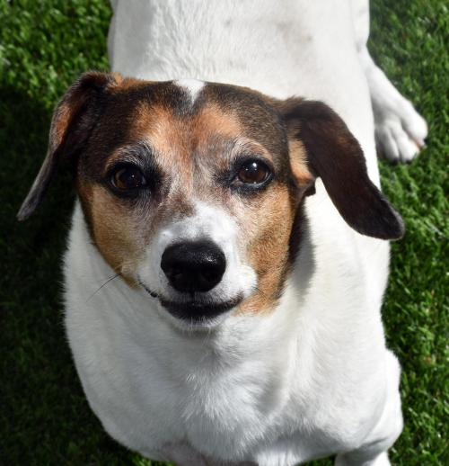 Clyde in NY (looking for LOVE)