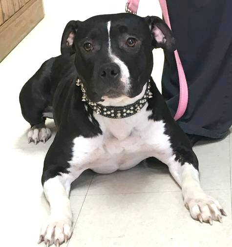 Culpeper Dogs For Adoption